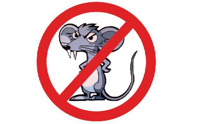 Lutte contre les rats